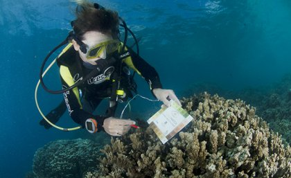 Diver checking color of coral with color chart