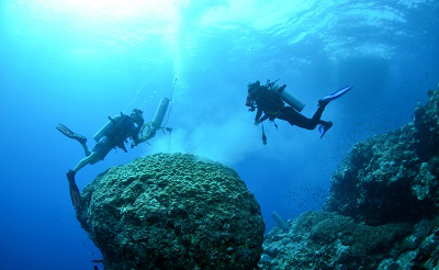 Divers inspect coral under water