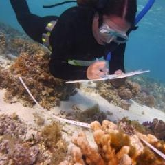 UQ PhD candidate Kristen Brown investigating coral-algal interactions