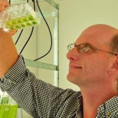 Prof Peer Schenk looking at algae in test tubes