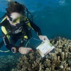 Diver checking colour of coral with colour chart