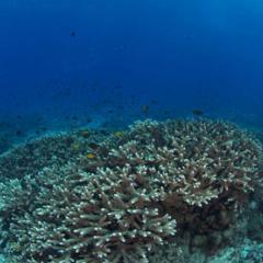 North coral garden