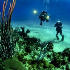 divers examine threatened coral