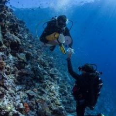 Researchers collect coral samples