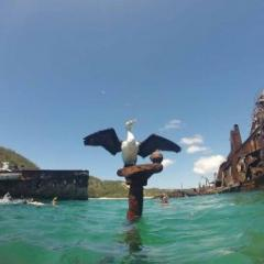 Sea bird perches on a wreck in Moreton Bay